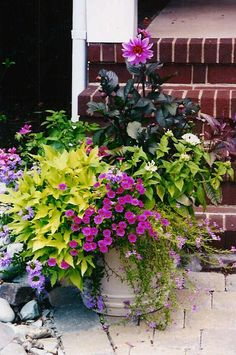 Dahlia, Sweet Potato Vine, Superbells,with some coleus would be a pretty combo