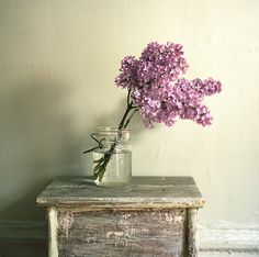 lilacs, photo Sussies värld