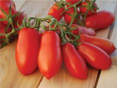 Ten Fingers of Naples Tomato - 75 days. Determinate. A paste or canning type that produces huge yields of elongated, pointed fruit reaching 5-6 inches in length, weighing to 3 ounces. Fruits are produced in bunches.
