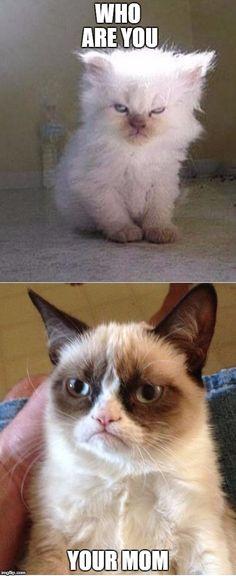 Grumpy Cats Meme Generator - Imgflip
