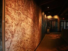Tectum- Standard Interior Acoustic Wall Panels - Custom paint. Use C-20 mounting for better acoustic performance.  Photo: Como Park Zoo Primate House, Saint Paul, MN