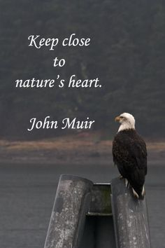 position of the bald eagle Nature Quotes, Me Quotes, Nature Nature, John Stott, Environment Quotes, John Muir Quotes, Hiking Quotes, Sup Yoga, Closer To Nature