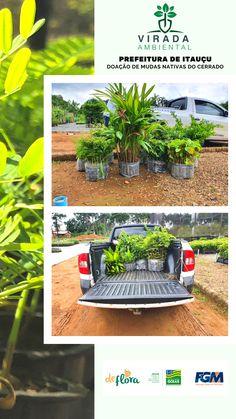 #deflorapaisagismo #nadefloratem Plants, Small Gardens, Gardening, Garden, Flowers, Plant, Planets