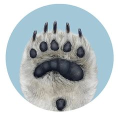 Polar Bear Paw Illustration (Polygone Studio, 2011)