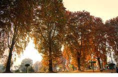 #kashmir blazing chinar trees in autumn, reminds me of John Keats (ode to the autumn) #travel