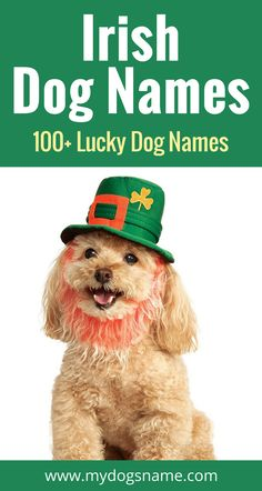 Get lucky with these fabulous Irish dog names! We've got over 100 lovely and lucky names that pay tribute to the Irish culture.