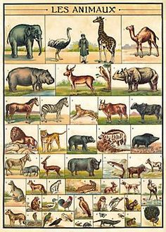 room wall decor - Cavallini Animals Wrapping Paper