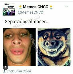 Memes Cnco, Brian Colon, Budgies, Pretty Boys, My Favorite Things, Disney, Funny, Funny Memes, Amor