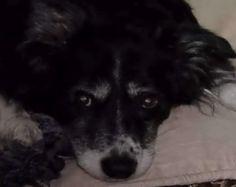 Loving owner fulfills dog's dying wish