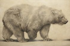 Polar bear by Vicky White, pencil on primed panel - © Vicky White/Jonathan Cooper Park Walk Gallery