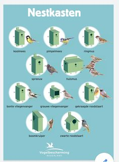 Bird House Plans, Bird Houses Diy, Bird Boxes, Nesting Boxes, Backyard Birds, Birdhouses, Beautiful Birds, Landscape Architecture, Bird Feeders