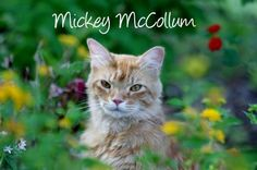 Vote for Mickey McCollum as pet of the week on our Facebook Fanpage!  www.facebook.com/petpages