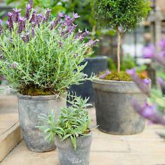 lavender in linnen wrapped vase pot from terrain