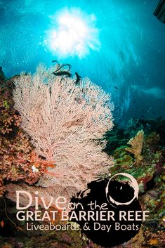 Cairns Diving Adventures provides visitors with a range of information on snorkelling + diving day trips, liveaboard tours and courses to the Great Barrier Reef.