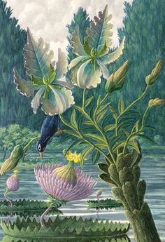 Catharina Nymphaeoidea by Karl Axel Pehrson (Sweden, 1921–2005). Phantasmagorical botany illustrator