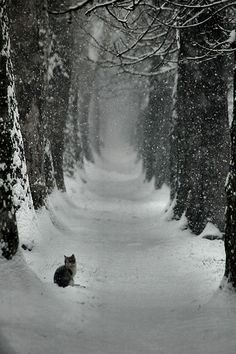 Kitty winter wonderland