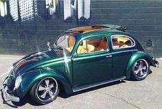 1955 bug