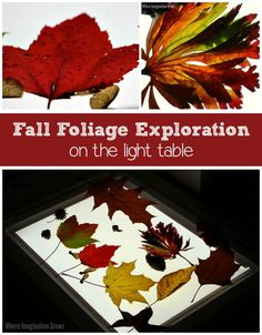 Explore fall leaves on the light table! Fun preschool nature play activity! Encourage kids to observe and record their findings! Fun fall learning activity for children. #lighttable #fallactivities #kidsactivitiesforfall #kidsactivities