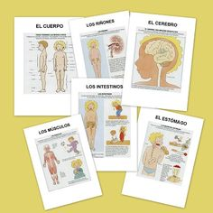 El cuerpo humano en fichas Spanish Class, Teaching Spanish, Blended Learning, Spanish Language, Teaching Science, Human Body, Homeschool, Bilbao, This Or That Questions