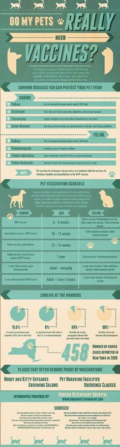 Do Pets need vaccines info-graph #dogs, #pets