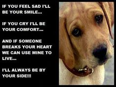 Loyalty quotes and sayings loyal dog face meaningful
