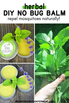 DIY Herbal No Bug Balm (with Lemon Balm) - Herbal No Bug Balm: Learn how to make this DIY homemade herbal no bug balm to keep unwanted bugs away! Made with pest repelling lemon balm. Natural Cough Remedies, Cold Home Remedies, Natural Remedies For Anxiety, Natural Health Remedies, Natural Cures, Natural Healing, Herbal Remedies, Natural Beauty, Natural Treatments