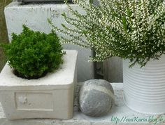 Herbst DIY: Beton und Konservendose / concrete and tin can