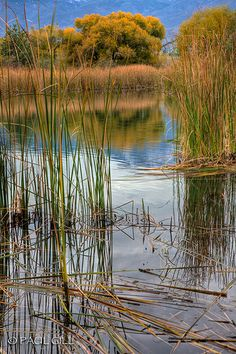 wetlands, Verde River Valley, Dead Horse State Park, Arizona