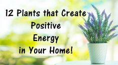 Nowadays, we often use the plants to decorate our home or office, or brighten up the yard or our garden.