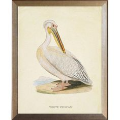 Highland Dunes A beautiful 'Pelican' Framed Graphic Art Print from a vintage bookplate framed in an antiqued metallic frame. Gothic Pictures, Art Nouveau Poster, Music Teacher Gifts, Vintage Art Prints, Art Classroom, Graphic Art, Poster Prints, Wall Art, Frame