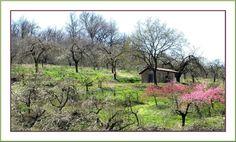 ... Dans le joyeux désordre coloré du printemps, la petite cabane s'ensoleille...