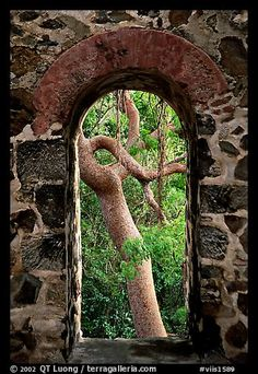 Trees through window of old sugar mill. Virgin Islands National Park, US Virgin Islands.