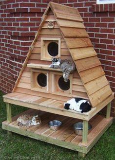 Leuk voor de katten in de tuin