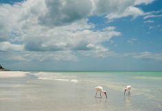 The Gulf of Mexico beaches are so incredibly beautiful that inspiration is around every corner.  I...