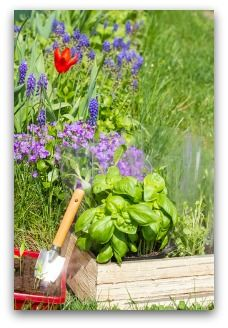 images about Vegetable Garden Beginner Plans on