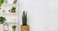 Planet Desert offers Cactus Identification, as well as, Cacti and Succulents identification to its clients as part of its services. We are a family owned business, and as a company we offer the best cacti and succulents to our clients by following the appended care tips