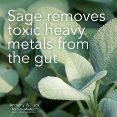 Holistic Health Remedies Sage removes toxic heavy metals from the gut. Gut Health, Health And Nutrition, Health And Wellness, Hair Health, Nutrition Classes, Nutrition Guide, Natural Health Remedies, Natural Cures, Natural Healing