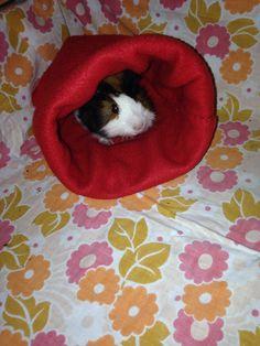 Guinea pig sleeping bag