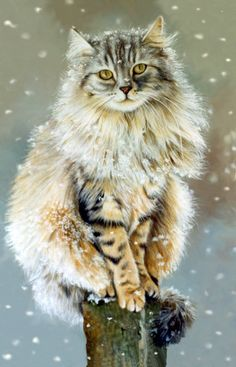 Maine coon ~ They are so pretty we had a monster as big as a med.one of the sweetest cats and well mannered! Cute Cats And Kittens, Cool Cats, Kittens Cutest, Pretty Cats, Beautiful Cats, Animals Beautiful, Animals And Pets, Cute Animals, Chat Maine Coon