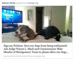 This current petition and fundraiser are scams. Please share. Thanks. http://gottalovedogs333.blogspot.com/2015/04/scam-alert.html