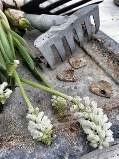 Garden Bulbs, Garden Plants, Spring Blooms, Spring Flowers, Garden Gates, Garden Tools, Grandmas Garden, Colorful Garden, Simple Pleasures