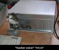 Lmao what is a hacker voice