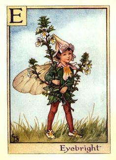 """Flower Fairy Alphabet: E is for Eyebright Fairy"" by Cicely Mary Barker."