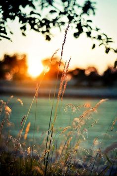 sunset at the lake - Ana Rosa