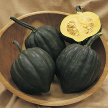 Table Treat Hybrid Winter Squash -This acorn-type squash is loaded with advantages. (1) Early maturity- enjoy first fruits in just 70 days. (2) Sweeter flavor- the smooth golden flesh has rich, nutty flavor enhanced with 50% higher sugars than other acorns. (3) Uniform high quality fruits with jet-black skin, 5-1/2 by 5 inches, weighing 1 to 1-3/4 pounds each. (4) Excellent disease resistance with outstanding powdery mildew tolerance. (5) Easy to manage bush plants. (6) High yields.