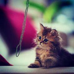 Sooo cute~~❤️