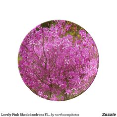 Lovely Pink Rhododendrons Floral Plate