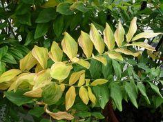 Signes d'automne sur mon balcon http://www.pariscotejardin.fr/2014/09/signes-d-automne-sur-mon-balcon/