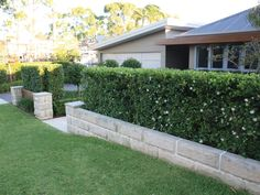 Sydney Buff Sandstone Pavers. Supplied by Sareen Stone www.sareenstone.com.au Sandstone Pavers, Landscape Design, Garden Design, Retaining Wall Blocks, House Exterior Color Schemes, Kerb Appeal, Front Gardens, Garden Yard Ideas, Front Fence
