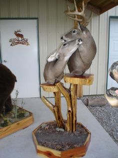 Buck and doe taxidermy head and shoulder mount Deer Hunting Decor, Deer Decor, Hunting Girls, Hunting Cabin, Bow Hunting, Hunting Stuff, Taxidermy Decor, Taxidermy Display, Faux Taxidermy